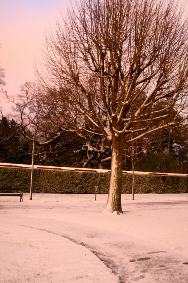 Location - Baum - Emmanuelle Wood