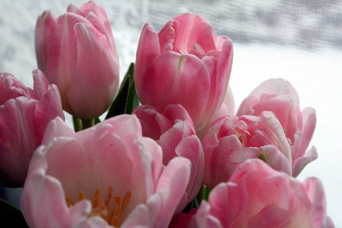Sonstiges Blumenstrauss by Emmanuelle Wood
